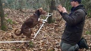 Balancing dog on a slackline
