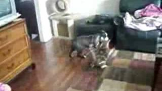 Cat protects a girl from dog attack. Let her go!