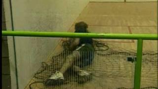 Fishing For Squash Players - funny video