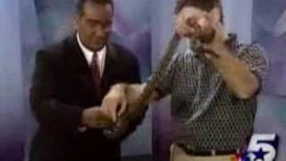 Lizard Jumps on News Guy - Dallas Funny News