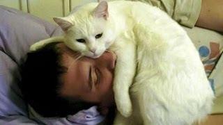 Cat Alarm Clocks Compilation 2014
