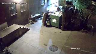 Bear steals an entire dumpster