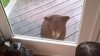 Curious baby bear comes to visit kitty