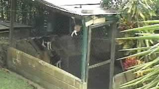 Impressive dog escape