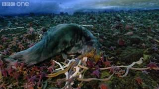 Timelapse of swarming monster worms and sea stars
