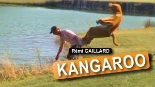 Rémi Gaillard - Kangaroo