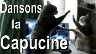 Cats playing patty cake (Dansons la capucine)