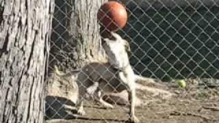 Dog the Juggler