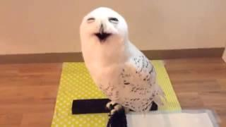 This owl looks extremely happy