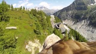 GoPro Cam - Fly like an eagle