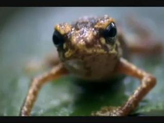 Epic Frog