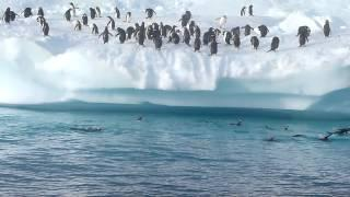 Penguins are great at jumping