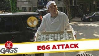 Egg attack - funny video