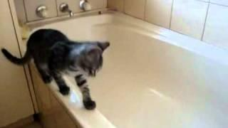 Cat Regrets Stepping Into Tub