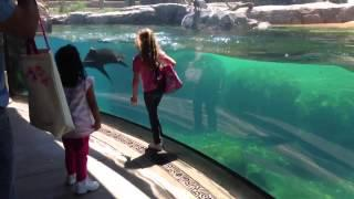 Sea Lion worried about Little Girl.