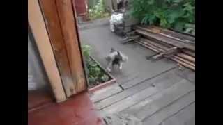 Dog fetching a cat