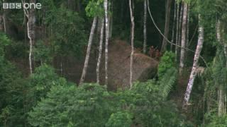 Uncontacted Tribe - Human Planet: Jungles