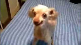 The Weirdest Dog Ever