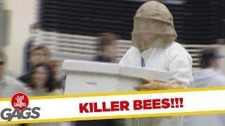 Killer Bees - Crazy Prank