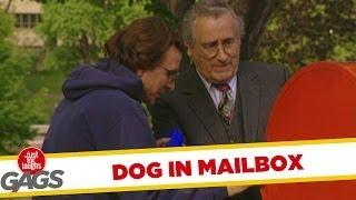 Dog Trapped in Mailbox - funny joke