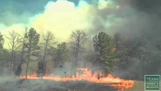 See how fast wildfire spreads - Texas Parks