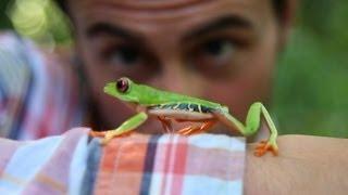 Follow the Frog - An advert about saving the rainforest