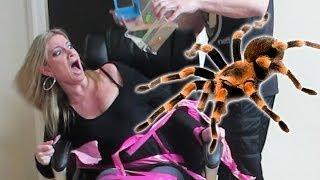 Terrifying tarantula - crazy prank