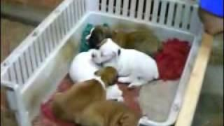 How to Train Puppies to Sleep - Dog Obedience Training