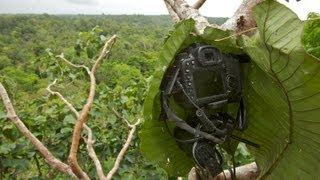 Behind the Scenes of the Birds-of-Paradise Leafcam