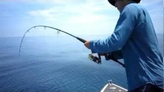 Shark Attack - North Queensland