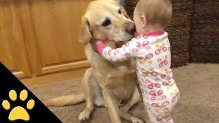 Adorable Babies And Cute Dogs: Funny Video Compilation