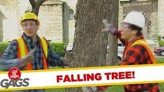 Falling tree - funny video
