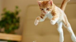 Epic Funny Cats Jump Fail