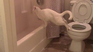 Funny cat fails to use the toilet