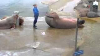 Sea Lion Rocky Training
