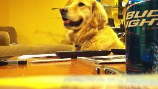 Dog Listening To Guitar