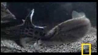 The Crafty Catfish Kidnap