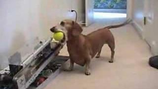 Dog and the machine in perfect harmony