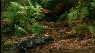 Frog vs. poison newt