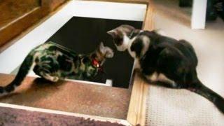 Kitten Gets Thrown Down a Loft Ladder