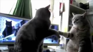 Cats Playing Patty-cake, what they were saying.