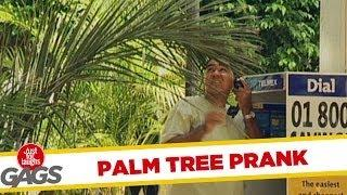 Annoying Palm Tree - Funny Prank