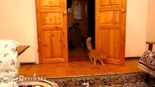 Cat Scared of Mario jump