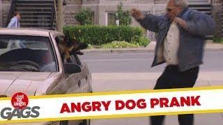 Angry Dog - funny joke