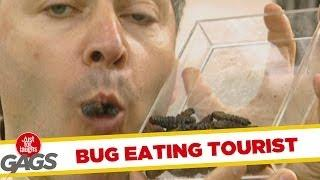 Bug Eating Tourist