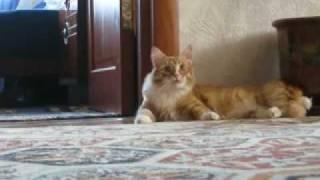 Funny Frankenstein Cat